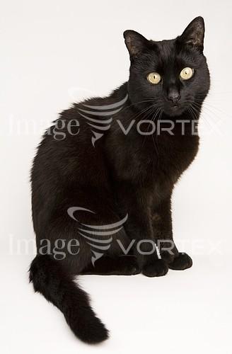 Pet / cat / dog royalty free stock image #108270579