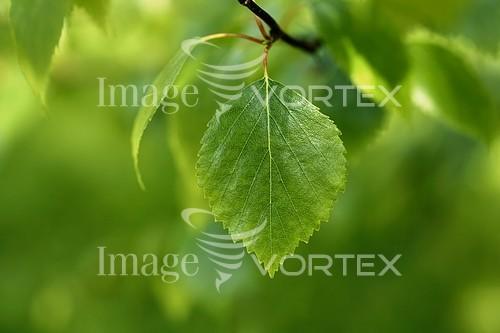 Nature / landscape royalty free stock image #116028749