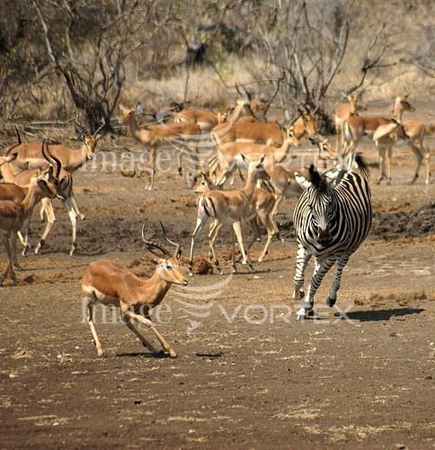 Animal / wildlife royalty free stock image #127811550