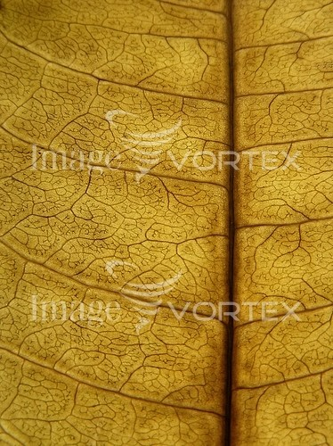 Background / texture royalty free stock image #128516389