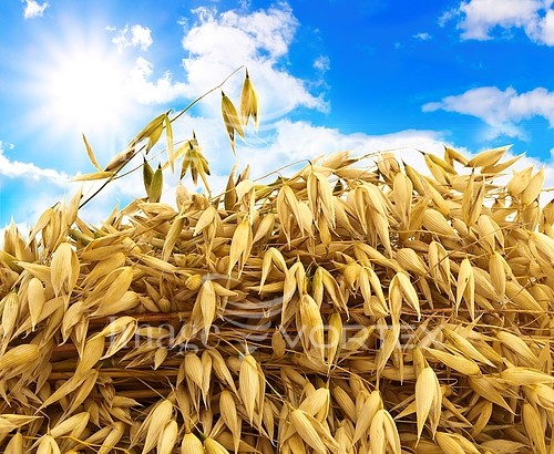 Industry / agriculture royalty free stock image #131413484