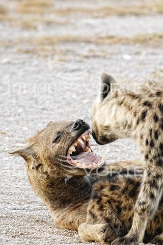 Animal / wildlife royalty free stock image #138764341