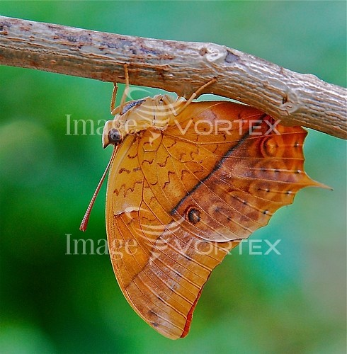 Insect / spider royalty free stock image #139515703