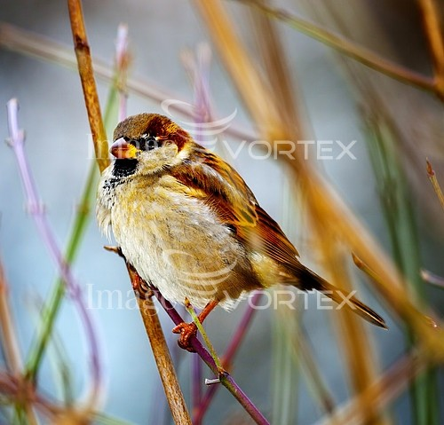 Bird royalty free stock image #144803703
