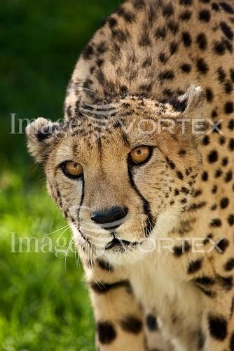Animal / wildlife royalty free stock image #166160942