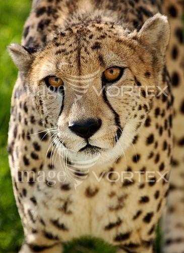 Animal / wildlife royalty free stock image #166319444