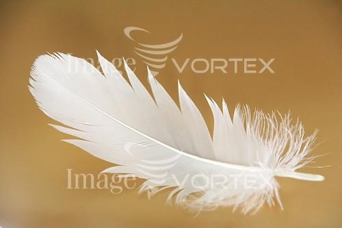 Bird royalty free stock image #171913710