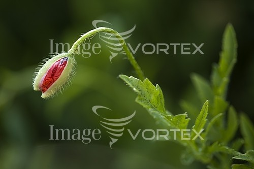 Nature / landscape royalty free stock image #172517179