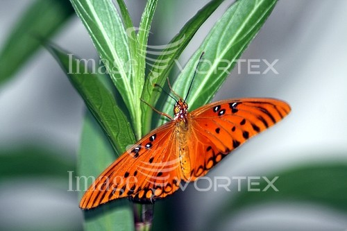 Insect / spider royalty free stock image #174736317