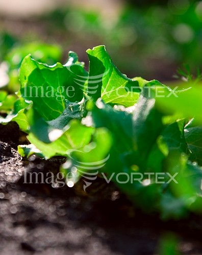 Industry / agriculture royalty free stock image #180746887