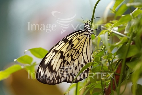 Insect / spider royalty free stock image #185850839
