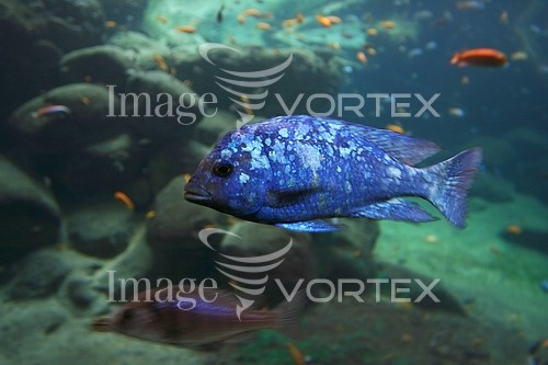 Animal / wildlife royalty free stock image #186986379