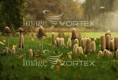 Nature / landscape royalty free stock image #191641344