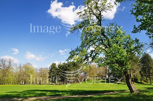 Park / outdoor royalty free stock image #206534090