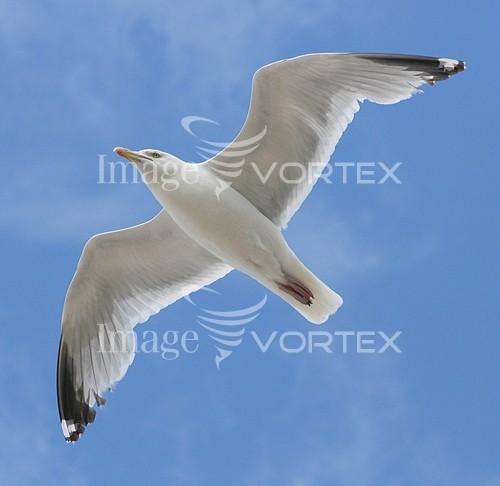 Animal / wildlife royalty free stock image #206935573