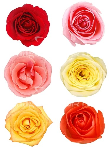 Flower royalty free stock image #217027111