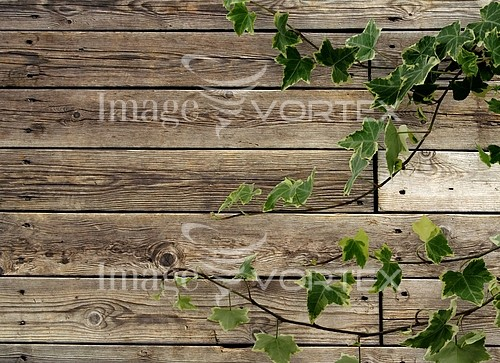 Background / texture royalty free stock image #220174311