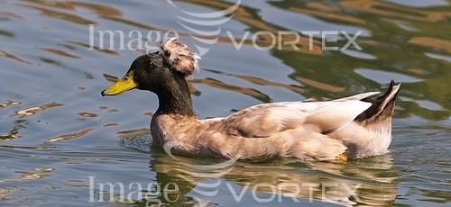 Bird royalty free stock image #229909371