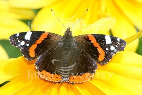 Animal / wildlife royalty free stock image #230715522