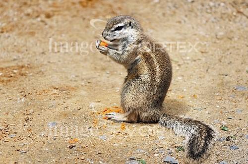 Animal / wildlife royalty free stock image #244929850