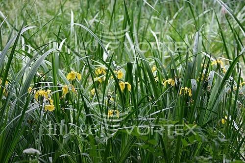 Nature / landscape royalty free stock image #245539334