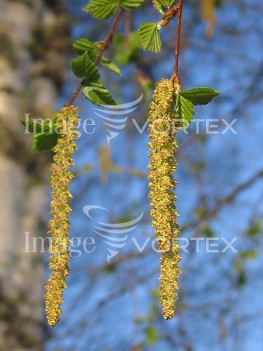 Nature / landscape royalty free stock image #247878053