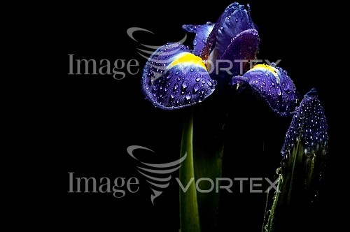 Flower royalty free stock image #251481133