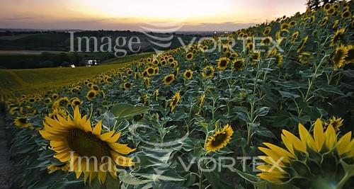 Flower royalty free stock image #259705123