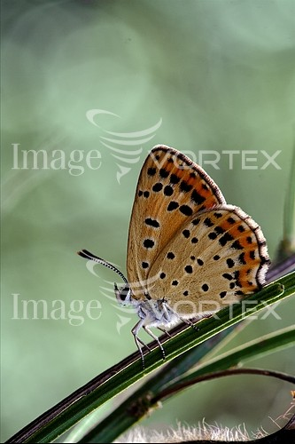 Insect / spider royalty free stock image #269062999
