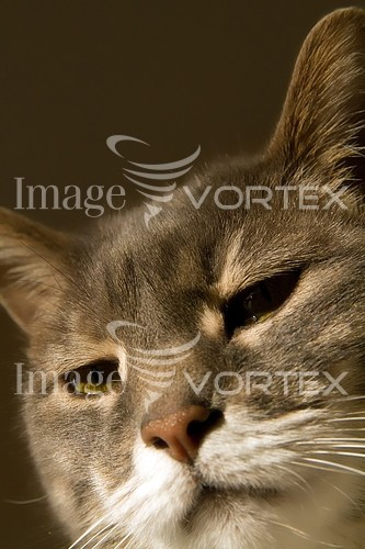 Pet / cat / dog royalty free stock image #279750016