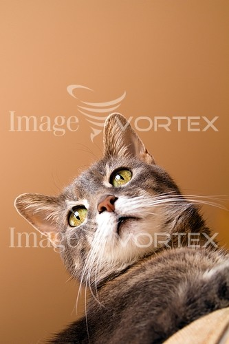 Pet / cat / dog royalty free stock image #280917499