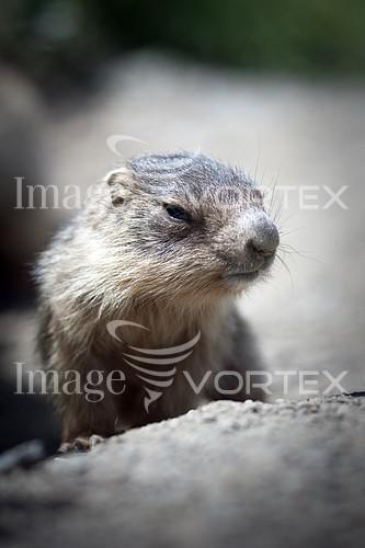 Animal / wildlife royalty free stock image #281372703