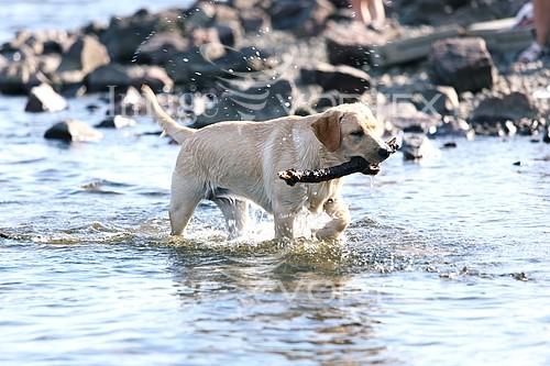 Pet / cat / dog royalty free stock image #300230549