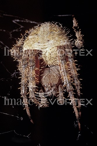Insect / spider royalty free stock image #318069325