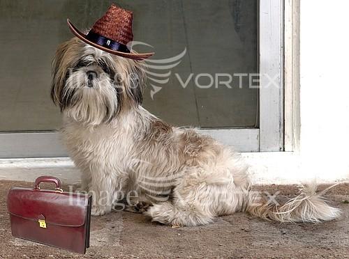 Pet / cat / dog royalty free stock image #334420729