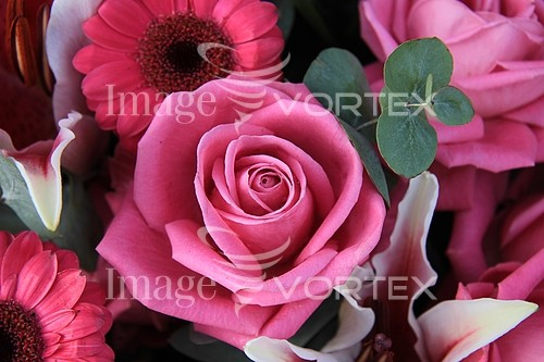 Flower royalty free stock image #353409730