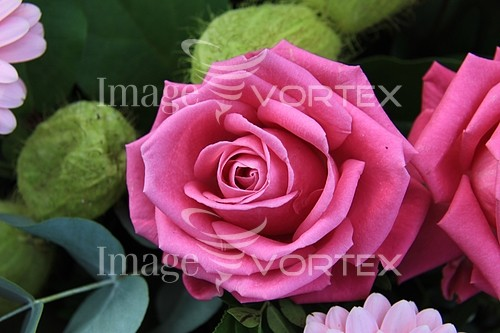Flower royalty free stock image #355330246