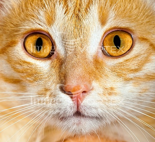 Pet / cat / dog royalty free stock image #357795096