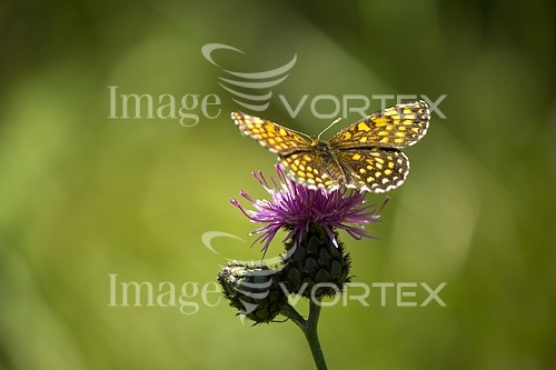 Insect / spider royalty free stock image #366910640