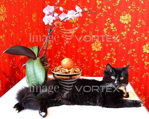 Pet / cat / dog royalty free stock image #372350868