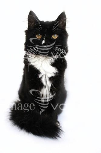 Pet / cat / dog royalty free stock image #372787686