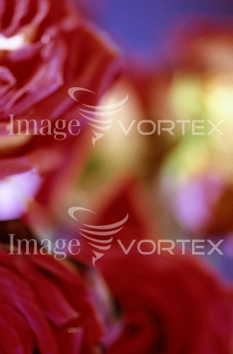 Background / texture royalty free stock image #372130360