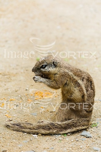 Animal / wildlife royalty free stock image #374831477