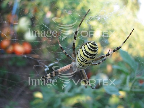 Insect / spider royalty free stock image #375015419