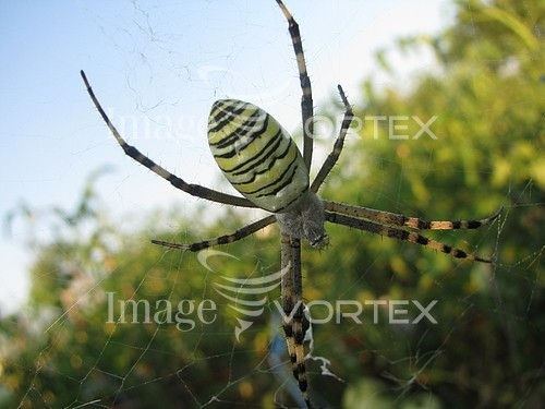 Insect / spider royalty free stock image #375022494