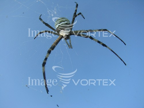 Insect / spider royalty free stock image #375039974