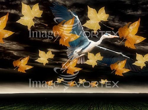 Bird royalty free stock image #375697455