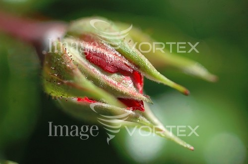Flower royalty free stock image #384140465