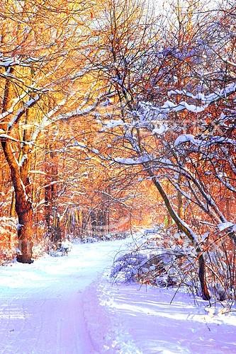 Nature / landscape royalty free stock image #387295582