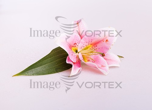 Flower royalty free stock image #389161318